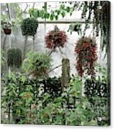 Plants Hanging In A Greenhouse Acrylic Print