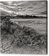 Plants On The Alvord Desert Acrylic Print