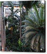 Plants - Us Botanic Garden - 011311 Acrylic Print