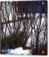 Plantscape2 2009 Acrylic Print