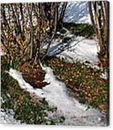 Plantsgrasscomp 2009 Acrylic Print