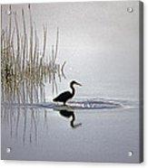 Platinum Heron Acrylic Print