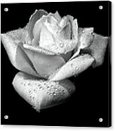 Platinum Rose Flower Acrylic Print