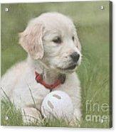 Play Ball Acrylic Print