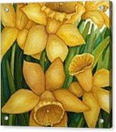 Playful Daffodils Acrylic Print by Vikki Wicks