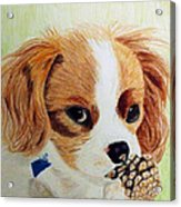 Playful Ginger Acrylic Print