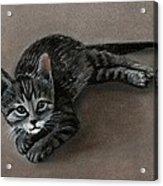 Playful Kitten Acrylic Print