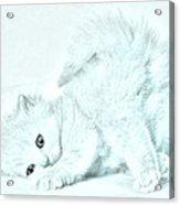 Playful Kitty Acrylic Print