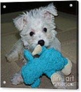 Playful Puppy Acrylic Print