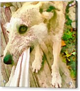 Playing Dog Portrait Acrylic Print
