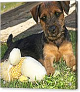 Playmates - Puppy With Toy Acrylic Print
