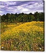 Pleasant Meadow Foreboding Sky Acrylic Print