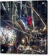 Pleasant Pheasant II Acrylic Print