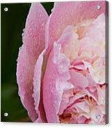 Pleasantly Pink  Acrylic Print
