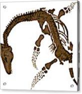 Pleisiosaurus, Mesozic Marine Reptile Acrylic Print