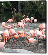 Plenty Of Pink Acrylic Print