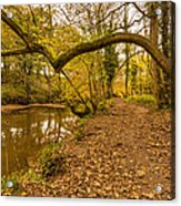 Plessey Woods Riverside Footpath Acrylic Print