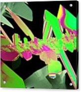 Plm Of Crystals Of Saccharin Acrylic Print