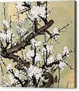 Plum Blossom Acrylic Print