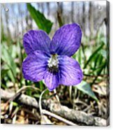 Plumb Wildflowers Acrylic Print