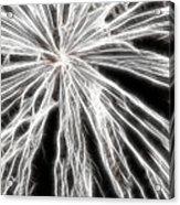 Plume Acrylic Print by Thomas  MacPherson Jr