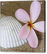 Plumeria Flower And Sea Shell Acrylic Print