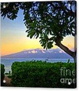 Plumeria Sunrise Acrylic Print