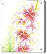 Plumerias  Acrylic Print