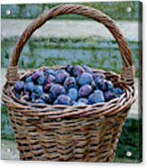 Plums In A Basket, Southern Bohemia Acrylic Print