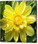 Pocketful Of Sunshine Acrylic Print