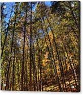 Pocono Trees Acrylic Print