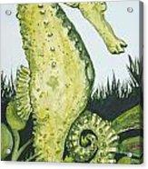 Pod Seahorse Acrylic Print