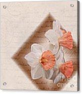 Poem Of Peach Daffodils Acrylic Print