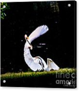 Poetry In Motion ... Acrylic Print