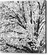 Poetry Tree Acrylic Print