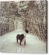 Pogo's First Snow Day Acrylic Print