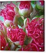Pohutukawa Tree Flowers Acrylic Print