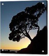 Pohutukawa Trees At Sunrise Acrylic Print