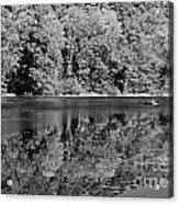 Poinsett State Park In Black And White Acrylic Print