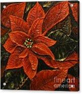 Poinsettia 2 Acrylic Print