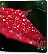 Poinsettia Leaf With Water Droplets Acrylic Print