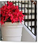 Poinsettias By The Stairway Acrylic Print