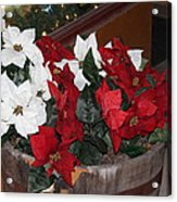 Poinsettias Acrylic Print by Edward Hamilton