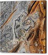 Point Lobos Abstract 4 Acrylic Print