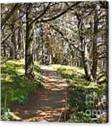 Point Lobos Cypress Path Acrylic Print