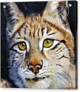 Pointed Advantage - Siberian Lynx Acrylic Print