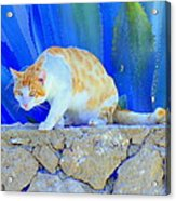 Look In The Blue For The Pointing Puma Acrylic Print