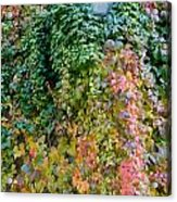 Poison Ivy Leaves Around Old Lantern Acrylic Print