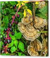 Poke And Bracket Fungi Acrylic Print