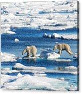 Polar Bear Cubs In Svalbard Acrylic Print